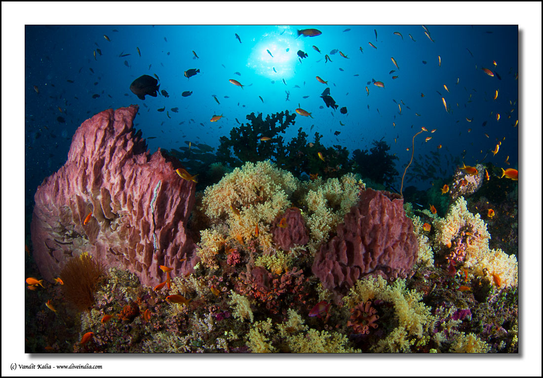 how to become a scuba diving instructor in india