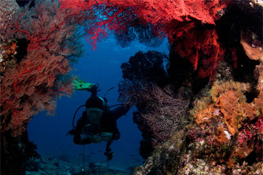 Scuba Diving Andamans
