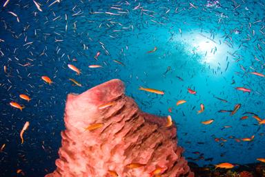 Dixon's Pinnacle reefscape