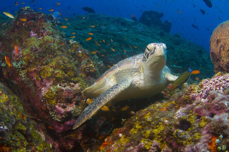 neil-diving-4new