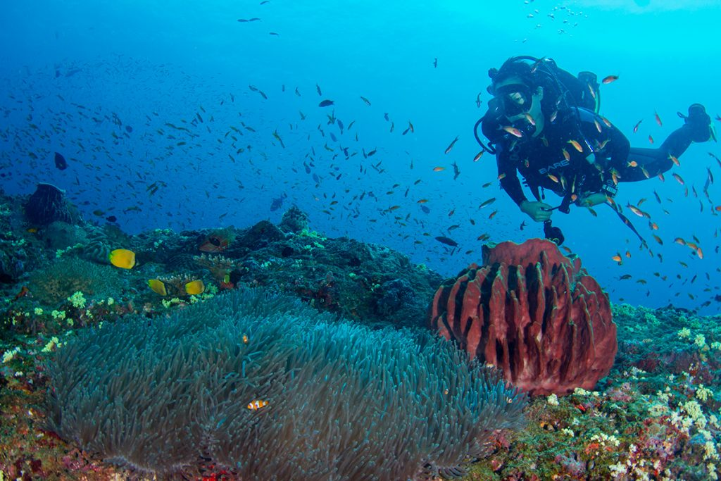 Scuba Diving Articles