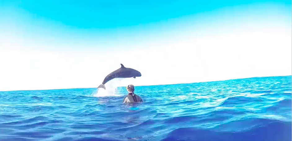 False Killer Whales jumps over Snorkeler