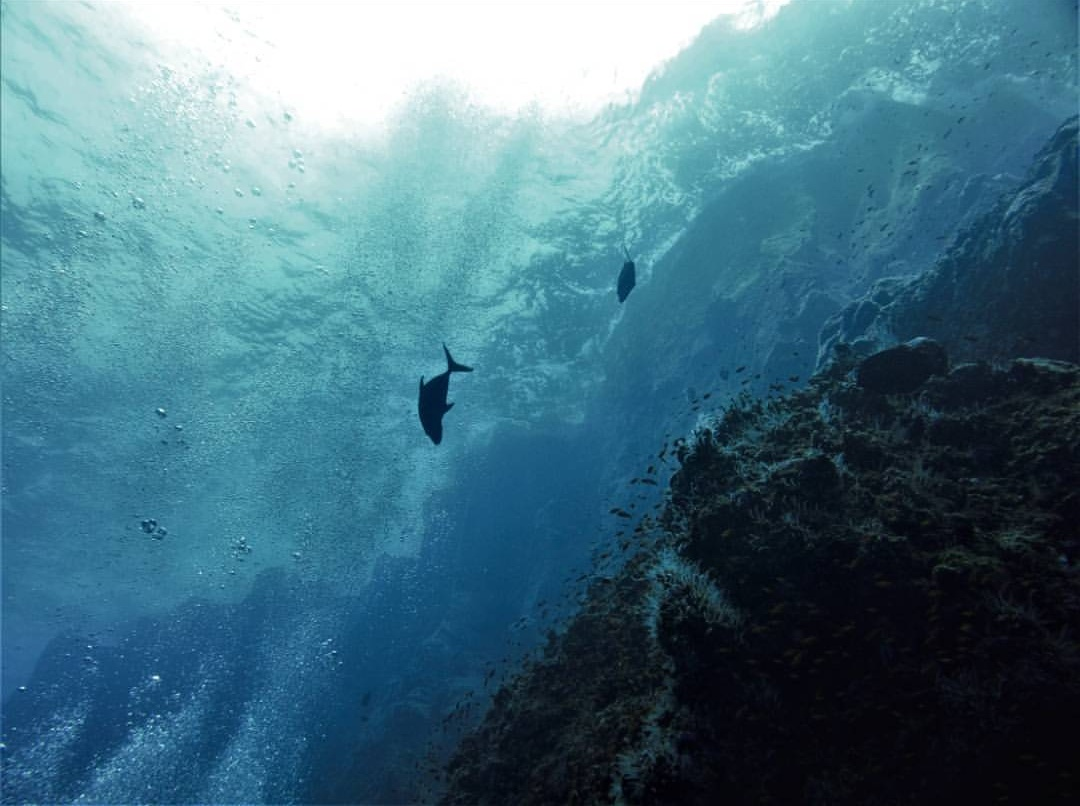 #OceanLove: The Highest Tide, by Jim Lynch