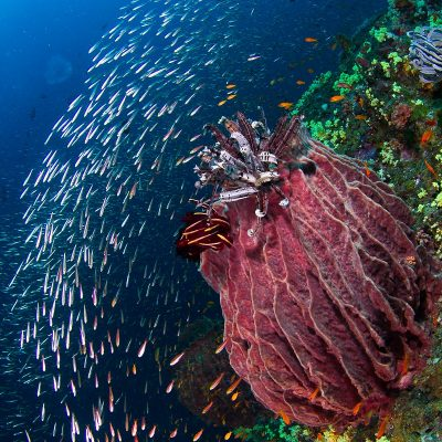 Marine life of Andaman Islands_Vandit Kalia