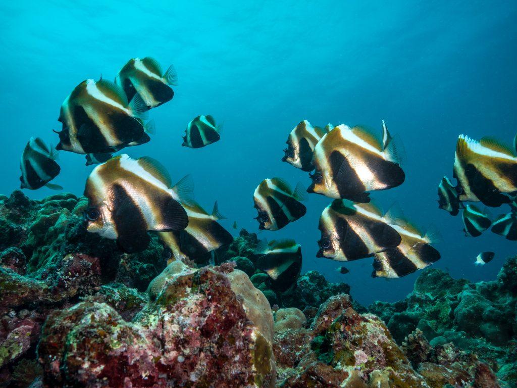 Deep Reef Half Moon Bay Coordinates
