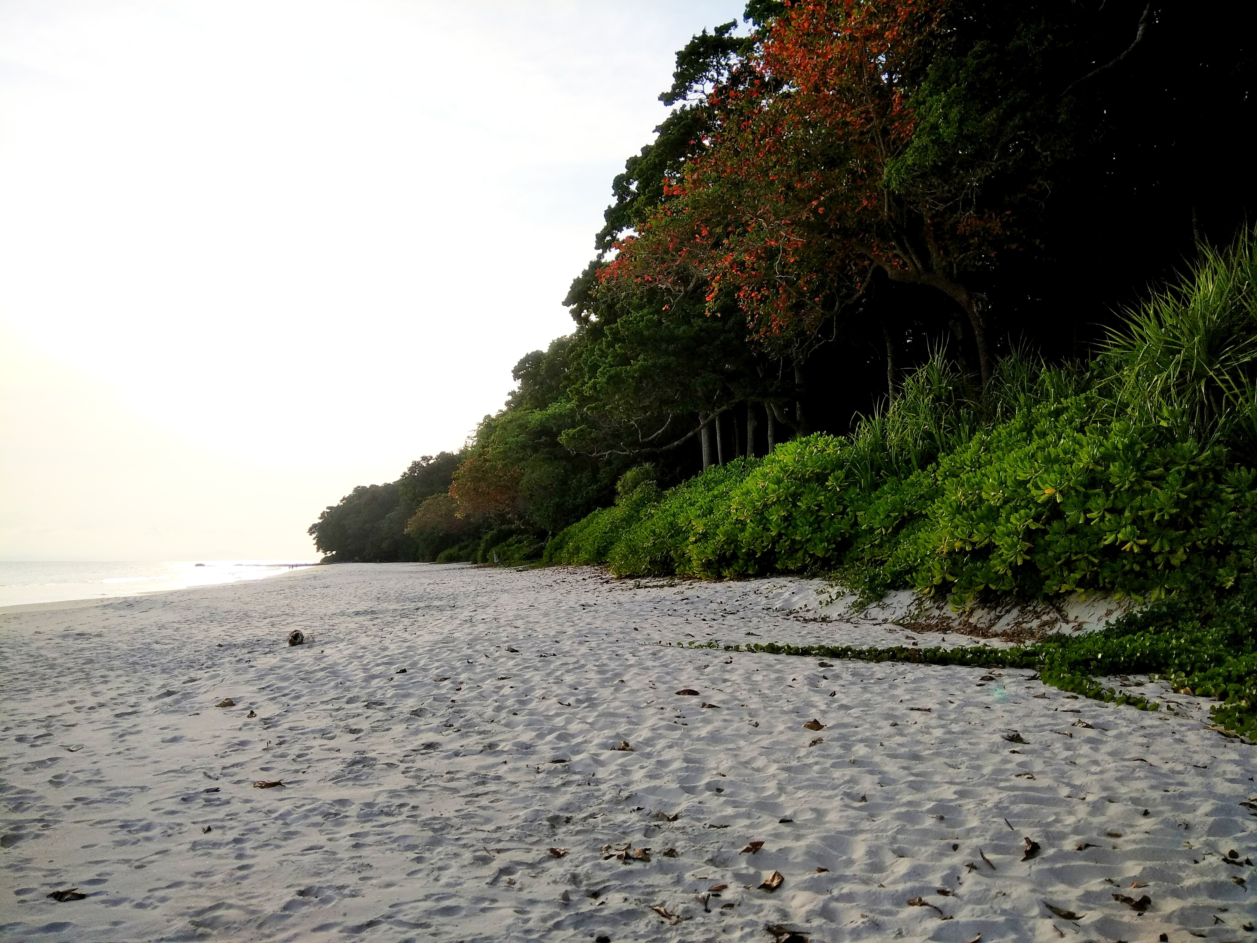 How to Plan A Trip to the Andaman Islands – Zero Waste and Ecologically Responsible