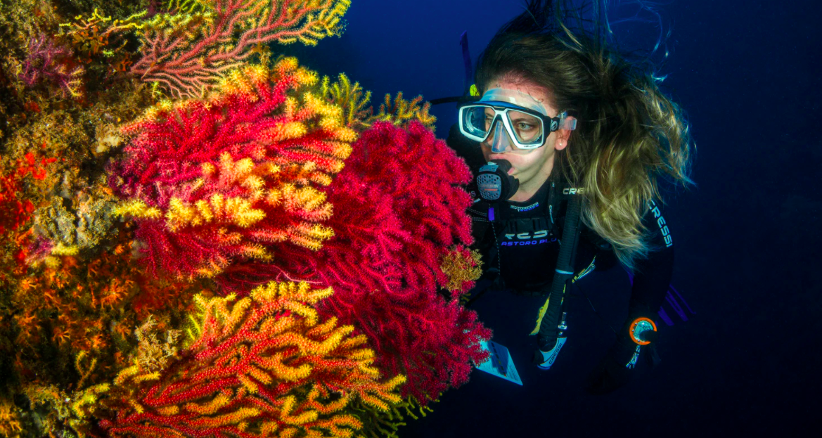 Which Island Is Better For Diving – HAVELOCK OR NEIL?