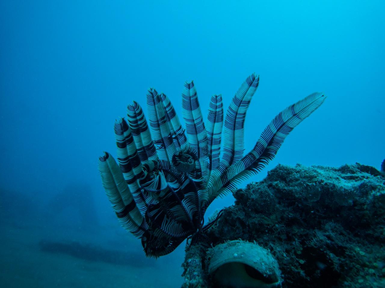 vaddi pop 1 Scuba Diving in Chennai – Best Dive Sites